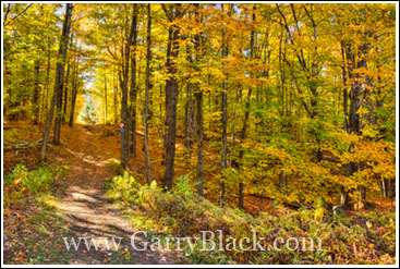 Autumn Photography Course Ottawa